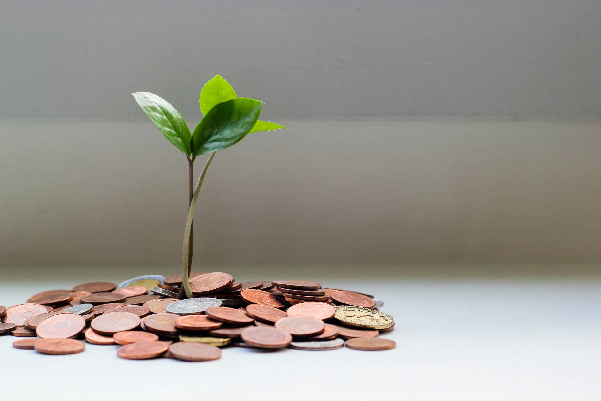 A small plant sprouts from a pile of coins.